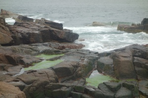 Along the shore in Acadia National Park