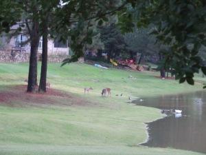 Back yard visitors in Mississippi.