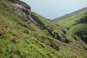 Sheep sheltered from the wind on Skye