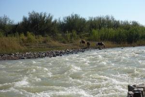 Wild Horses on Rio Grande