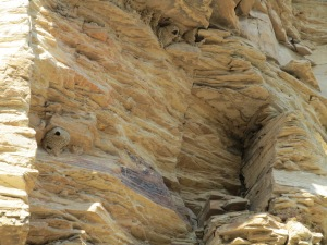 Mud bird nest in the cliff near the Rio Grande