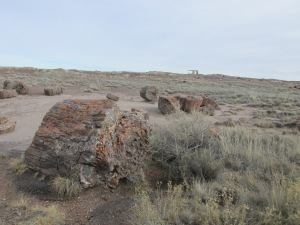 Petrified Wood in the Painted Desert National Park
