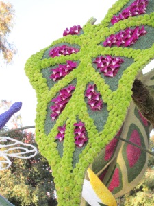 Caladium:  Rose Parade Float