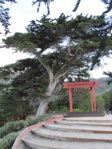 Monterey Cedar