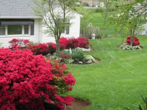 Azalea Riot in the Knoxville Dogwood Festival Trails