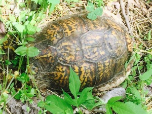 Mr. turtle