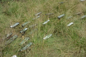 Vintage rear view automobile mirrors planted in the grass
