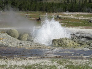 Steam Boat Geyser