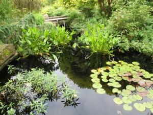 Mature water gardens