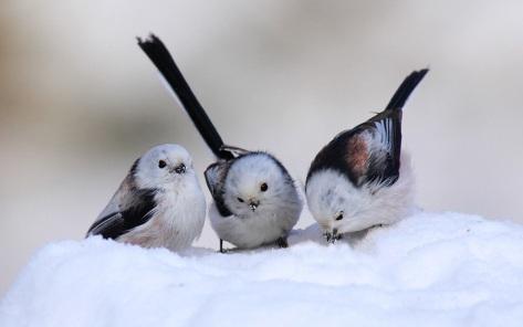 1birds