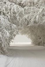 ice-trees